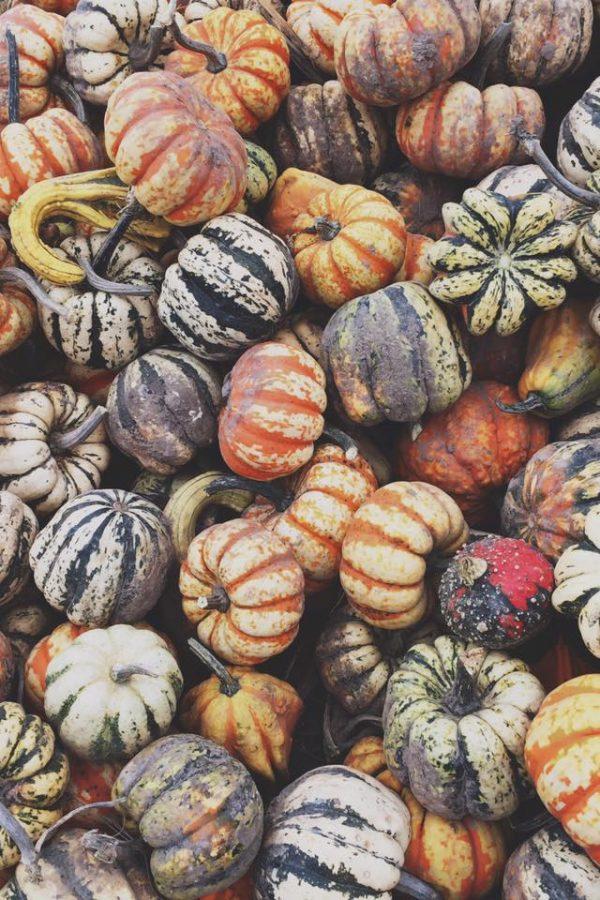 Fall Favorites Tag + Bucket List